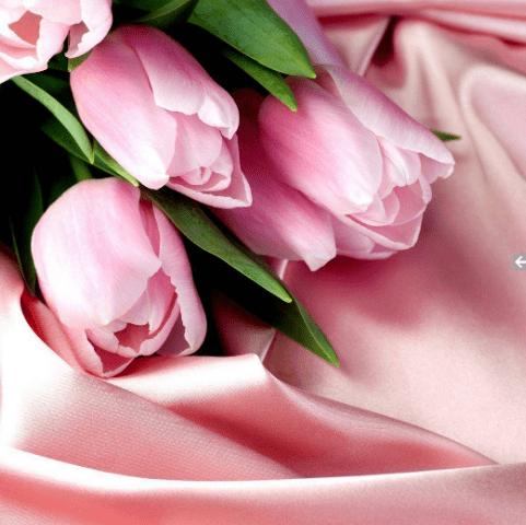 Фотообои с цветами. Тюльпаны