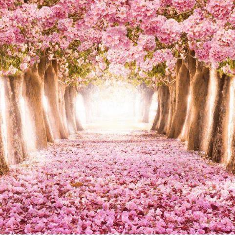 Фотообои расширяющие пространство. Розовый лес