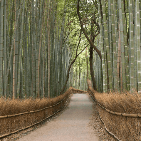 Обои, расширяющие пространство. Бамбук